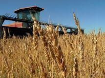 Le cours du blé en hausse de 1%, à 736.25 US$c/bu