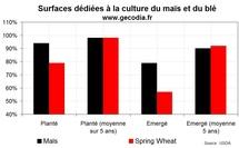Les cultures de blé toujours très perturbées aux US, la situation normalisée pour le maïs
